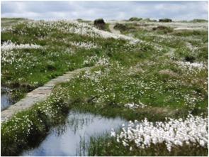 restored bog