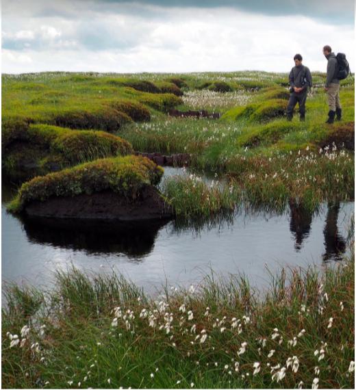 Moorland peat